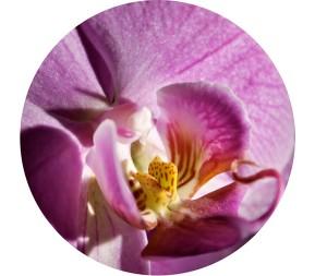 Jet Concepts Skincare - Purple Peel Orchid